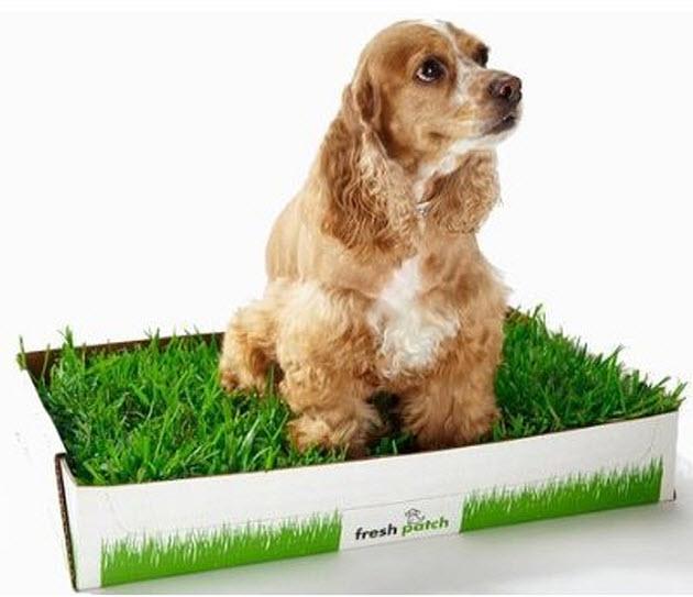 Dog-training-litter-box