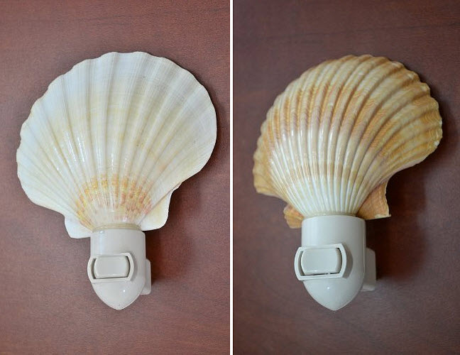 real-seashell-night-light